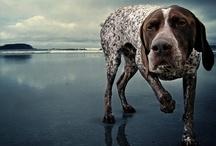 doggy :)  / by Kelsi Allenbach