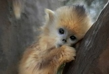 04- ANIMAL - Others  #animals / by Katell Chen