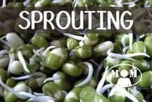 FOOD | Sprouting & Microgreens / Sprouting and growing microgreens are awesome ways to grow green all year long and get those vital nutrients, even in the worst weather! Brought to you by www.momwithaprep.com / by Jane @ Mom with a PREP