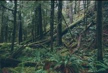 PNW / Where I am now. Pacific Northwest / by Christine
