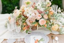 Place Settings / The perfectly set table