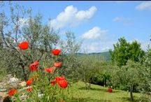 Tuscany in the Spring / Tuscany in the Spring is a special time! / by To-Tuscany