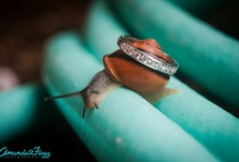 Ring Shots / by Amanda Flagg