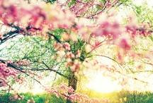 [spring] / by Kelli White