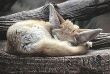 \\ Animalia // / Furry folk.