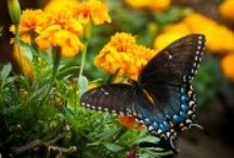 Butterflies and Peacocks / by Joy Muehling