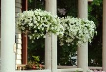 Hanging FLOWER Pots / by Tammy Augustine