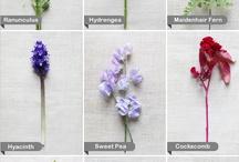 Guide des fleurs