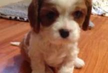 Puppy's I <3 & General Cute Stuff x