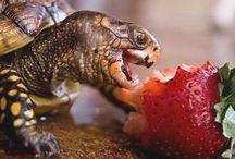Animals - Reptiles