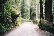 Outdoors - Forests, Woods, & Trees / I'd rather waltz than just walk through the forest.  / by Samantha
