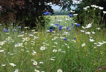 Outdoors - Fields, Meadows & Open Spaces