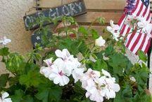 My Big Back Yard & Garden Ideas