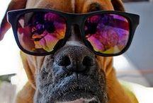 Dog Tips & Ideas