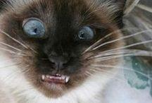 Funny Catz