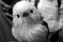 a bird in hand... / by Amy Stallard