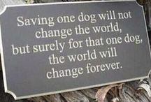 Fostering Dogs  / I have been fostering dogs since 2009. I love finding forever homes for all the dogs that have passed through my life.