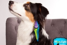 Moonlight Feather Puppy Clips ♥ / This is super cute feather clips just for doggies!