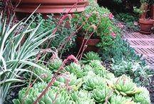 Garden Dreaming/Inspires / by Tina Short