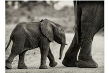 Elephant Stuff / Cute stuff featuring pachyderms.