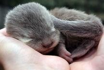 Cute Critters / by Linda Heringes Gurule