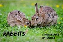 Rabbits / All about Rabbits