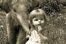 Elephant Love / by Carma Scott