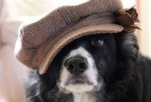 Border Collie / A board for a puppy / by Sarah Garland (Thought on a Roll)