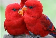 Exotic Birds (crooked beaks) / Exotic birds with crooked beaks