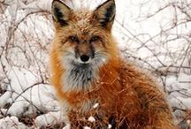 KONINGKAART • Vosjes / De kinderkamer versieren is een hele taak, maar met dieren zit je altijd goed! Hier de leukste inspiratie voor een kamer, versiert met vosjes.