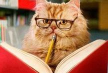Cats and Books / Two of life's greatest pleasures