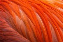 Orange / #orange