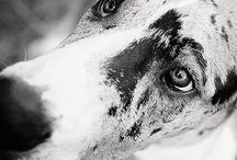 Pet Photography Inspirations / Images from photographers I admire, artistically + professionally.