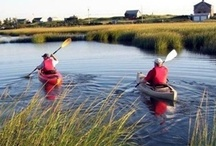 Fun on Cape Cod and the Islands / With a wide variety of activities to do on Cape Cod, Nantucket, and Martha's Vineyard, there is never a dull moment. From whale watching to golfing and everything in between, we have it all. So come visit us and find out what the Cape and Islands have to offer.