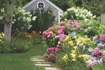 Coastal Gardens / Daffodils, Rhododendrons, Hydrangeas, Daylilies and Hastas.....This time of year the coastal gardens on Cape Cod, Nantucket, and Martha's Vineyard are blooming with vibrant colors and aromatic scents.