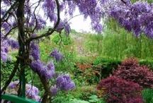 Landscaping & Gardening / by Bridgette L Gregory