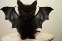 Halloween Ideas / Easy Halloween ideas, Halloween recipes, Halloween costumes for kids and pets.