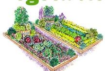 School Garden Resources / by Model Classroom