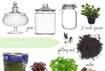 DIY Terrariums / Various posts about the supplies you'll need to make a fantastic Terrarium!