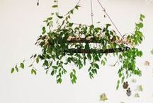 Suspended Florals / Chandeliers