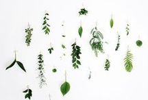 Botanical Foliage / Foliage inspiration for wedding floral styling {bouquet, Centrepeices, installations, favors, gift wrapping, backdrops}