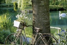 ~LET'S BIKE IT~ / by Diane Harris-Day