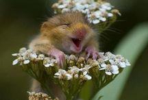 Smile. Laugh. Truth. / by Savannah Hennig