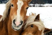 ♥~MY LOVE FOR HORSES~♥ / by Diane Harris-Day