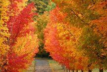 Autumn Leaves / by Rita Leonard