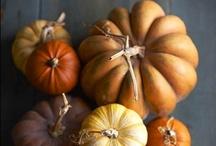 Autumn. / by Cassie York
