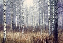 Rustic / by Lindsay Brillson