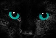 ...BLACK / by Tammie Jackett