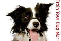 ^×^  dog training  / by Tammie Jackett