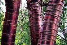 GARDEN-  trees